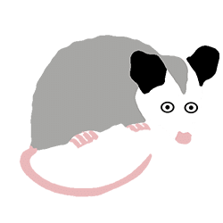 opossum algorithme local Google