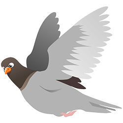 pigeon algorithme local Google